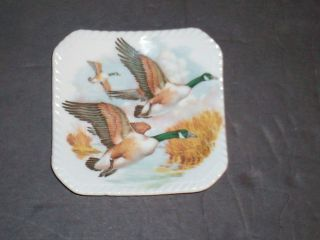 Royal Adderley Floral Fine Bone China England ~ Right Flying Mallard