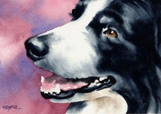 BORDER COLLIE Watercolor Dog Art ACEO Print Signed DJR