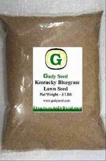 Kentucky Bluegrass Grass Seed   Beautiful Lawn!! 12 lbs  Direct from