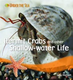 Hermit Crabs and Other Shallow Water Life (Paperback)