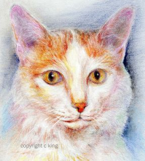 ORIGINAL PASTELS ART PORTRAIT TURKISH VAN CAT