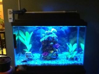 Newly listed 20 Gallon Fish Tank With Stand