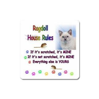 RAGDOLL KITTY CAT KITTEN UNIQUE FUNNY COMIC COMICAL SLOGAN PICTURE