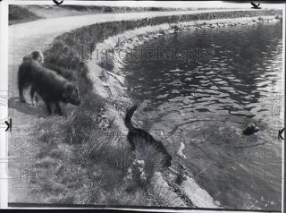 Photo Bostons Drinking Water Supply Chestnut Hill swim pool for dogs