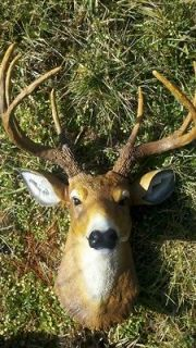 BUCK DEER HEAD 8 POINT LARGE WHITETAIL MOUNT TAXIDERMY
