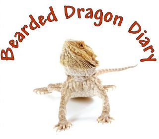 bearded dragon in Pet Supplies
