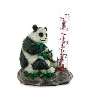 bamboo plant in Home & Garden