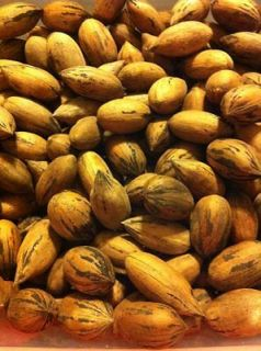 2012 in shell pecans nuts 10 pounds alabama crop no
