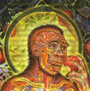 LSD Blotter Print Adam Eve by Alex Grey Tool