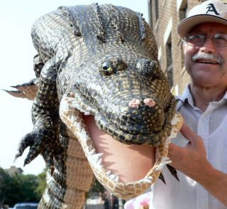 72 Stuffed Alligator Crocodile Giant 6 Feet Long Green