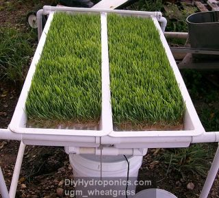 DIY Hydroponics Aquaponic Systems How to Plans Gardening Kit