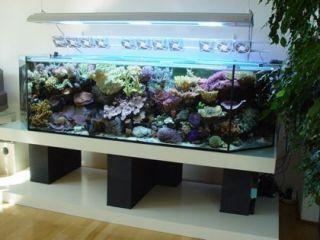 800 Gallon Glass Saltwater Reef Shark Tank Aquarium