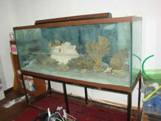 Glass Aquarium Fish Tank 210 Gallon Used 72 x 24 x 28 All Pumps