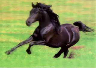 3D Lenticular Black Arabian Horse Postcard Galloping