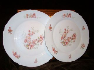 Arc Arcopal France Pink Flower Apple Cherry Blossom Dinner Plate