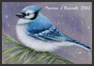 ACEO Original Sketch Card Color Pencil Painting Bluejay Snow Flurries