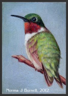 ACEO Original Sketch Card Color Pencil Painting Rubythroated