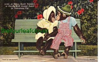 Chimpanzees Bench Wild Animal Ranch St Petersburg FL PC