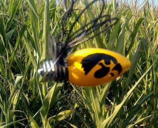 Fireflies with University of Iowa Hawkeye Made in Iowa