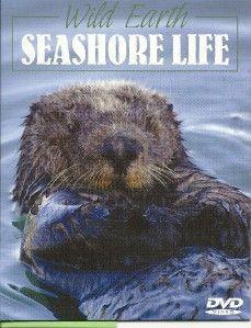 Wild Earth Series Seashore Life Otters Seals Birds Sea Lions Nature