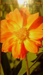 2014 Pocket Calendar 2 Year Planner CUTE Yellow Orange Flower on Cover
