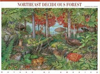 Nature of America Northeast Deciduous Forest Stamp 3899