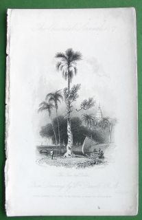 India Palmyra or Fan Leaf Palm Tree 1837 Antique Print by w Daniell