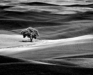 Lone Tree Black White Dennis Frates Framed Picture