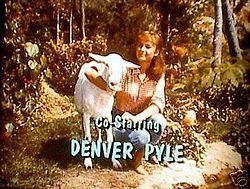 Complete TV Series on DVD 1965 RARE Debbie Watson Denver Pyle