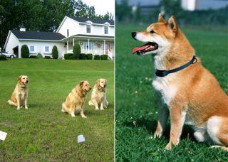 for PetSafe Electronic Pet Dog Fencing System 300 Meters
