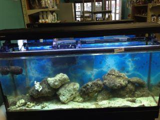 55 Gallon Aquarium Fish Tank wi Wood Stand
