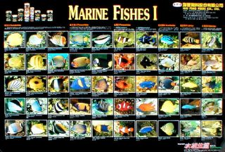 Marine Fishes I (2 versions   Aqualife and Hai Feng Feed)
