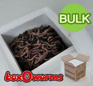 Bulk Canadian Nightcrawlers Live Bait Fishing Worms Pet Feed