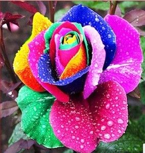 20pcs Rainbow Rose Flower Seeds Roses Seeds Plants Flowers Grow
