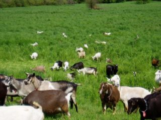 Capra Mineral Goat Milk Whey Powder 25 4 oz 499