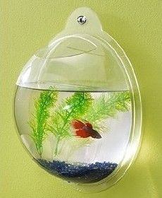 MOUNTED HANGING FISH BOWL BUBBLE TANK AQUARIUM TERRARIUM HOME DECOR