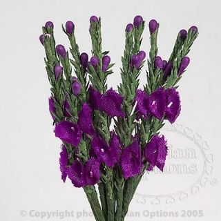 Scottish Purple Heather Flower Stems Wedding Favour Decoration Craft
