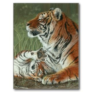 Hey Mom Wake Up Tiger cub and mother postcard