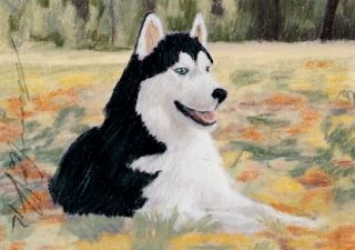 ACEO Original Pastel Drawing Siberian Husky by Anna Hoff
