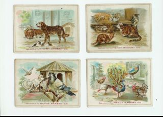Early 1900s Heydt Bakery Company 11 Trade Cards Animals All Sorts