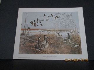 Canada Geese at Horicon Marsh Remington Arms Company 1973 Lithograph