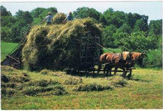Amish Haymaking Postcard Horse Drawn Equipment