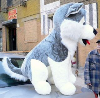 Huge 50 Stuffed Husky Big Plush Dog Jumbo Large New