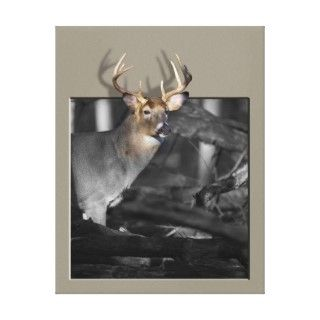 mature buck whitetail deer on this photo with digital enhancements