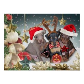 Miniature Pinscher Puppies wearing Christmas gear and posed with