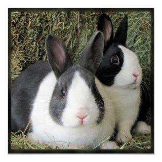 Foto grande de la lona de los conejos holandeses impresiones de
