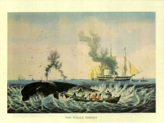 Old Print Sperm Whale SHIP Hunt Harpoon 1800s Boat