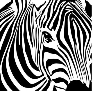 Large ZEBRA Decal Removable Vinyl Wall Art Stickers Girls Room