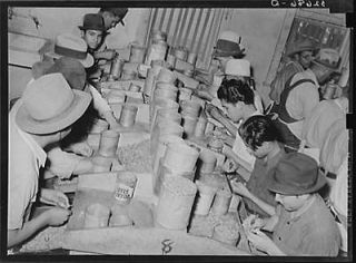 shellers removing meats from shell. Union plant. San Antonio,Texas