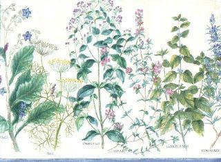 KITCHEN HERBS, SAGE, DILL, OREGANO, THYME Wallpaper Border WL10850